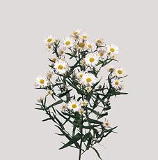 Flor de relleno