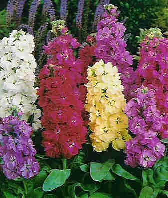 Flor temporada